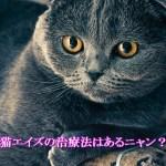 猫エイズにびびるな!!治療法は無いが免疫力を上げて頑張ろう!!