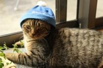 くまぷ~の帽子、菊さんのお下がり