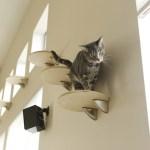 猫のストレスを減らす環境づくり 〜環境エンリッチメント〜