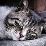 猫が吐いた時に考えること 〜嘔吐〜