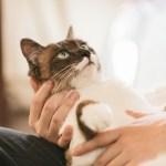 猫が痩せた時に考えること 〜体重減少〜
