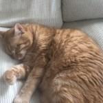 心臓病の猫は睡眠中の呼吸数が増えるのか?を検証した論文