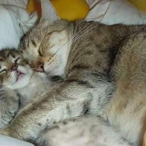 【萌え注意!】猫の母性本能にキュンキュンしちゃいましょう