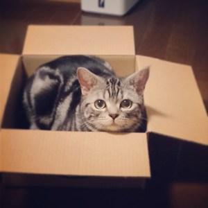 なんでそんなに好きなの?箱がたまらなく好きな猫たち