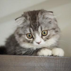 実は、猫の好みは素気ない人間って本当ですか!?