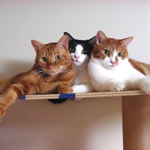 猫好き女子必見!今すぐ食べに行きたい猫モチーフスイーツ