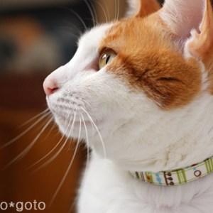 猫だってオシャレしたい!猫に似合ういろんな首輪♪