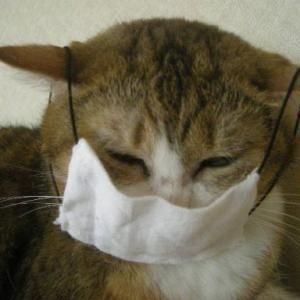 猫もニキビができる?猫ニキビの仕組みと予防・対処法