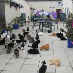 海外の猫パラダイス:イギリス、マン島にあるMann Max Sanctuary