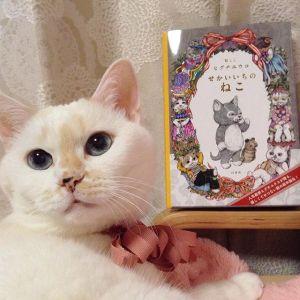 【妄想プラン】サンタになった愛猫がプロデュースする素敵なクリスマス♪