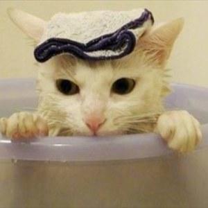 【寒い夜はこれを見てほっこり温まろう】お風呂好きニャンコの入浴集♪