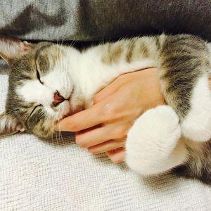 【ギュ!!】腕にしがみついて抱き枕にする猫が愛しすぎて