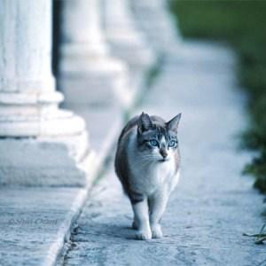 【まるで絵画】ヨーロッパの風景と猫が美しすぎる画像たち