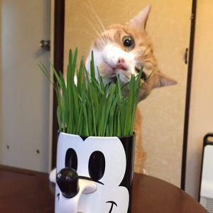 教えて猫先生!「七草」を正しく「ねこる」方法♪