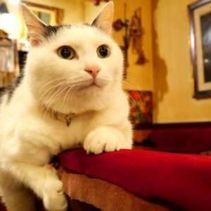 【新宿・看板猫】五右衛門のあとを継いだ次郎長と石松がもてなすカフェは居心地抜群♪