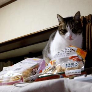 バレたにゃん!イタズラがバレたときの演技が下手すぎる不器用な猫が可愛すぎ(―_―)!!