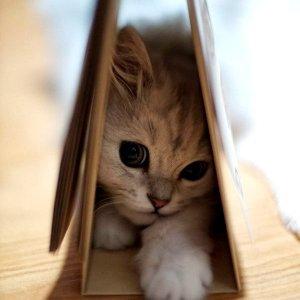 【狭い所大好き♡】狭い所に入る猫たちのオモシロ可愛い画像30選