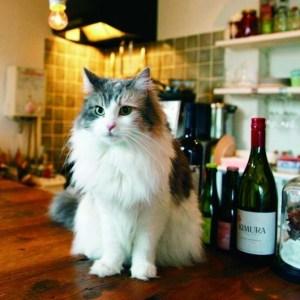 【一緒に飲まにゃい?!】美人ネコ店長のいるワインバーで今宵は一緒にワインを飲みませんか。