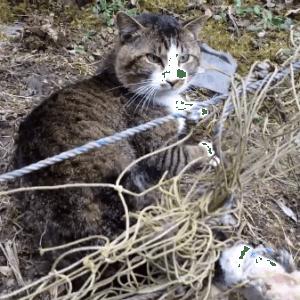 つるの恩がえしならぬ猫の恩返し?罠にハマってしまった猫を救出!