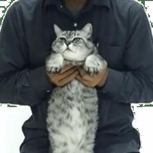 ネコがPPAPを踊っちゃう!?意外とイイコにしてるところが驚きΣ(・ω・ノ)ノ!