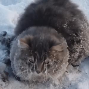 お湯で溶かされた猫!?極寒の地で地面に凍り付いていたところを救出される!