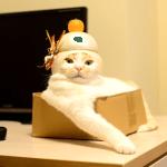 あけましておめでとうニャ~!鏡餅になった猫が可愛すぎる♪