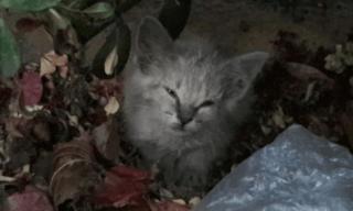 少女が発見した裏庭の茂みの中でひとりぼっちだった子猫。空腹だった子猫のお腹が大変なことになっていた!