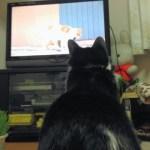 ネコ歩きを見る猫