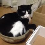 夏でも猫鍋