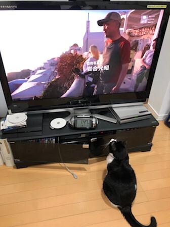 ネコ歩きを見る猫 2020 その3