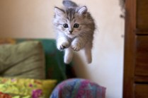 飛ぶよ!跳ねるよ!
