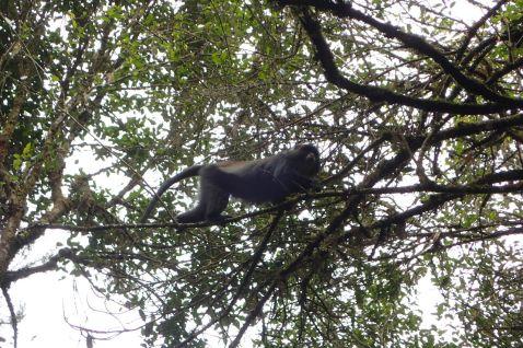 Affen begleiten uns