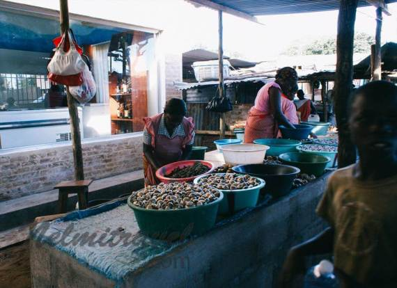 Maputo; Places to visit in Maputo; Fish Market in Maputo; Maputo Fish Market; Fresh Fish in Maputo.Where to buy fish in Maputo; Maputo Mozambique
