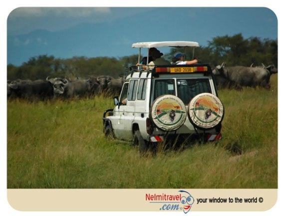 uganda gorilla trekking; uganda safari; uganda gorilla safaris; uganda gorilla tours; uganda safari; Advanture Natural African Safaris