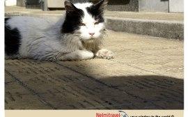 la recoleta cemetery cats; recoleta cemetery; cats recoleta cemetery buenos aires; gatos cementerio de la recoleta; cats recoleta cemetery;