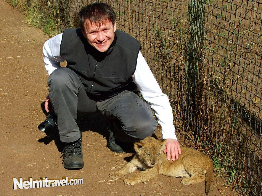 lion, safari, lion park, Randburg,South Africa, Nelmitravel;