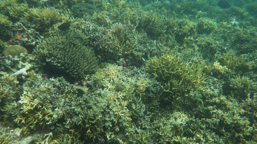 Snorkeling at Seven Commandos Beach