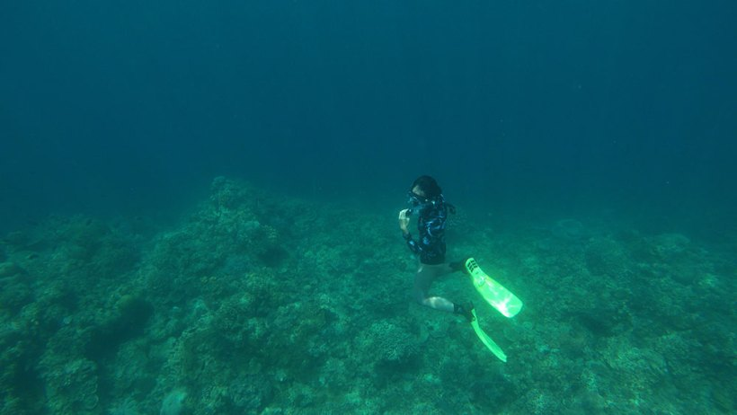 Freediving at Bunker Dive Resort