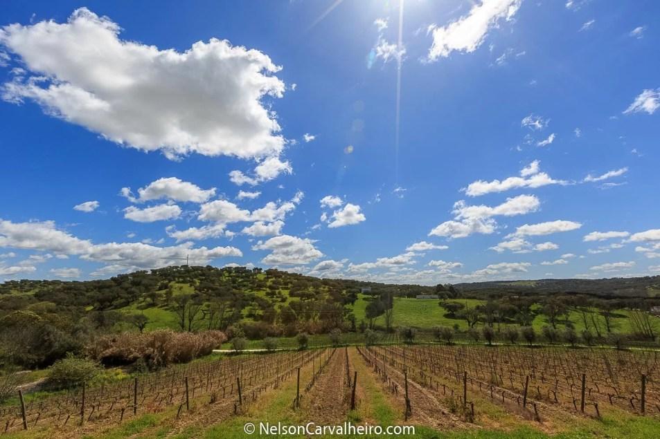 Nelson_Carvalheiro_Alentejo_Wine_Travel_Guide_Monte_Ravasqueira-22