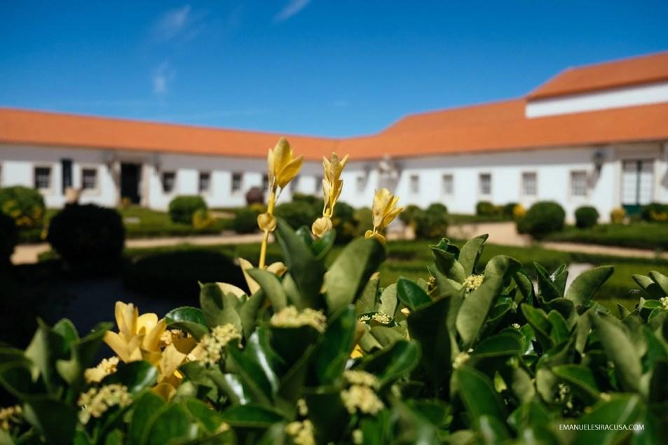 emanuele-siracusa-centro-de-portugal-aveiro-vista-alegre-28