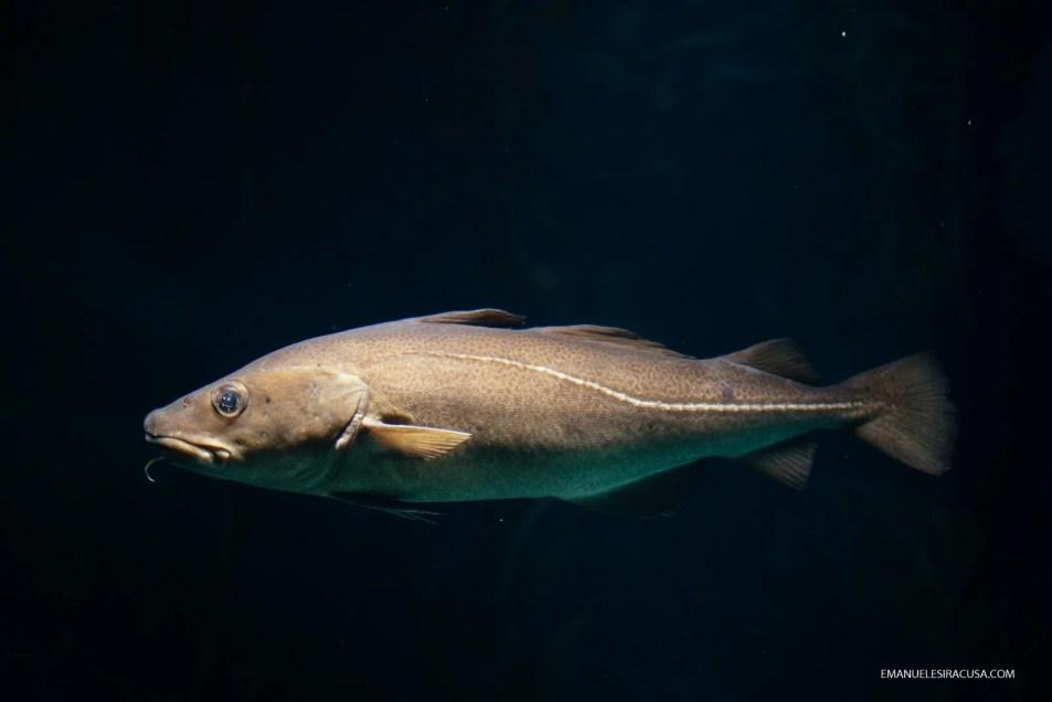 emanuele-siracusa-centro-de-portugal-ilhavo-codfish-museum-29