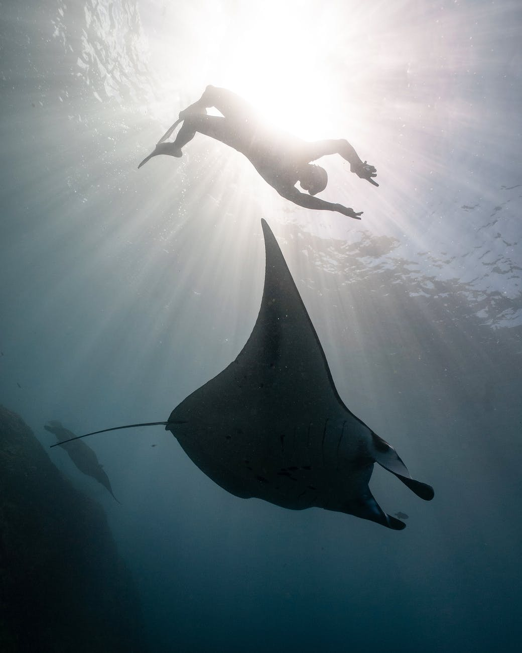 scuba diver and whale under water