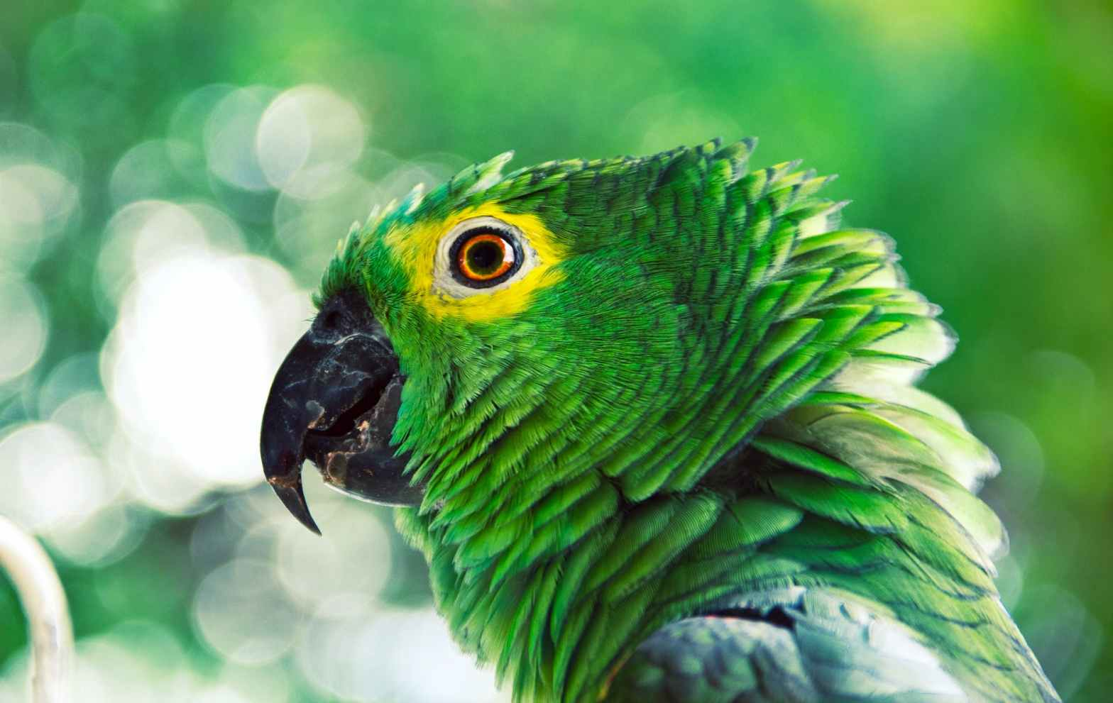 close up photo of green parrot