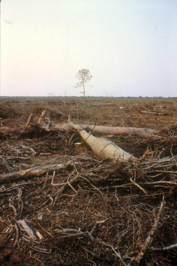 Deforestación del Chaco para el ganado.Portugal, Alentejo, árbol
