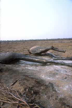 Quema de la deforestación