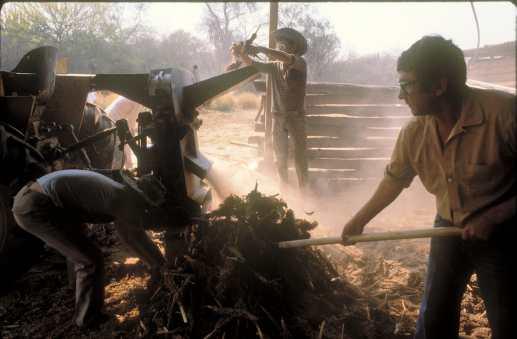 Paraguay, el Chaco, Ganadería, La sequía hace estragos., animal, Comida para el Ganado.
