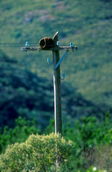 Uruguay, Sierra de Mina, nido de Pájaro hornero