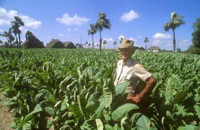 Cuba, Pinar del Río, hora del descanso, plantaciones, Tabaco, retrato