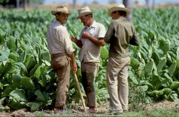 Cuba, Pinar del Río, Plantación de Tabaco