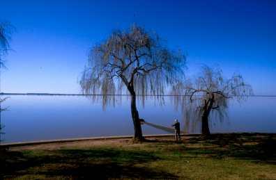 Uruguay, Fray bentos, Río Uruguay, árbol